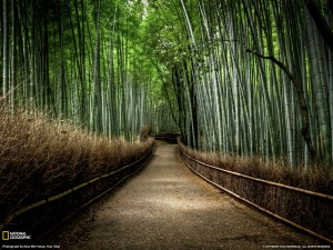bamboo-forest-photo-nature-national-geographic-photo